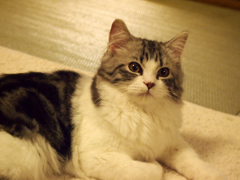 2012・12猫の時間63.jpg