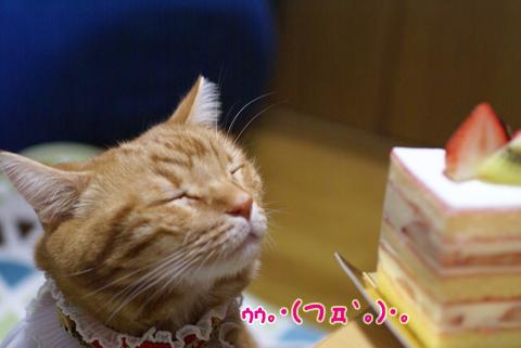 2013ミュウ誕生日18.jpg