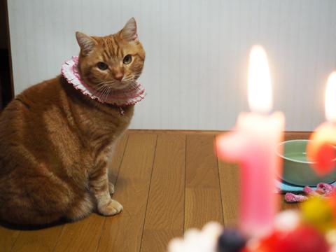2015ミュウ誕生日1.jpg