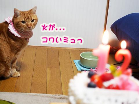 2015ミュウ誕生日2.jpg