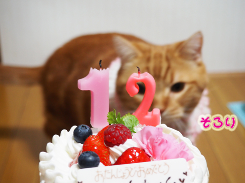 2015ミュウ誕生日3.jpg
