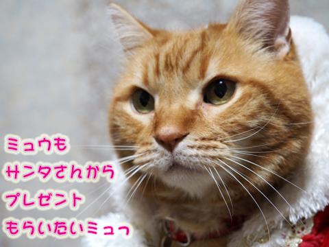 2016ミュウサンタ1.jpg