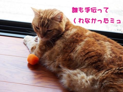 2017夏シャワー後-4.jpg