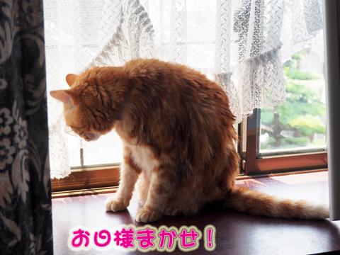 2017夏シャワー後.jpg