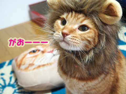 いちごを食べるライオン-1.jpg