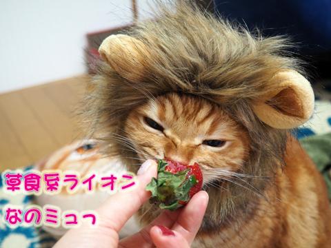 いちごを食べるライオン.jpg