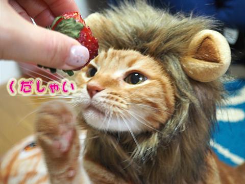 いちごを食べるライオン1.jpg