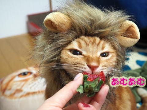 いちごを食べるライオン2.jpg