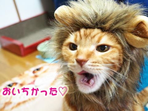 いちごを食べるライオン3.jpg