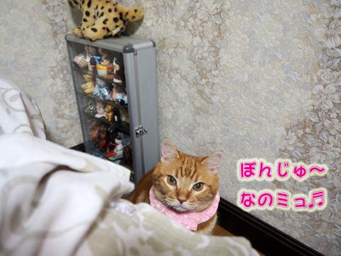 じゃらし遊び.jpg