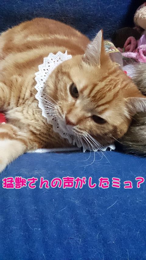 らいおんさん1.jpg