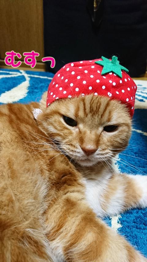 イチゴの妖精?.jpg