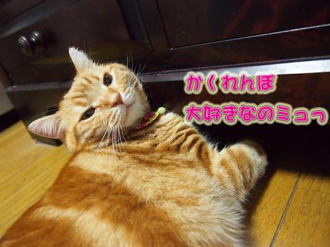 ウツボの魅力2.jpg