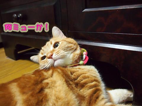 ウツボの魅力4.jpg