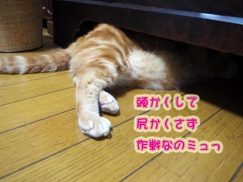 ウツボ活動1.jpg