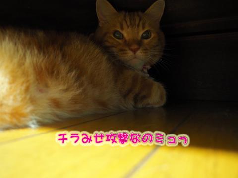 ウツボ活動2.jpg