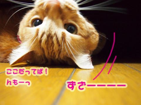 ウツボ活動201506-4.jpg