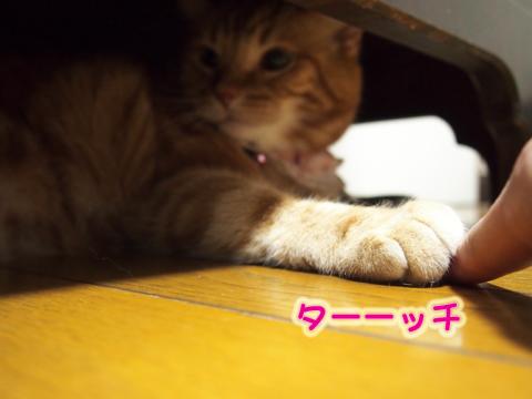ウツボ活動201506-7.jpg