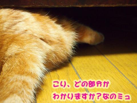 ウツボ活動201506-9.jpg