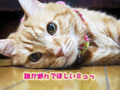 ウツボ活動201708-8.jpg