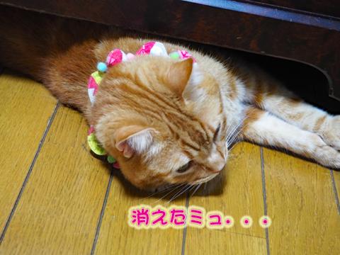 ウツボ活動201708-4.jpg