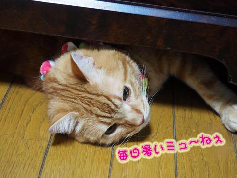 ウツボ活動201708.jpg