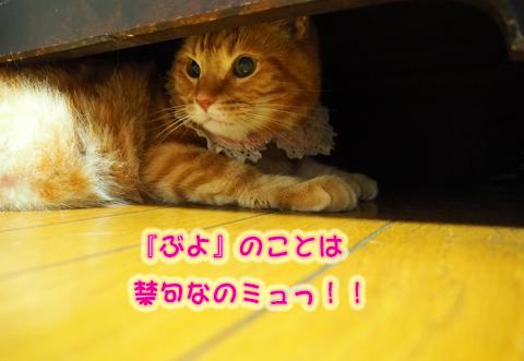 ウツボ活動3.jpg