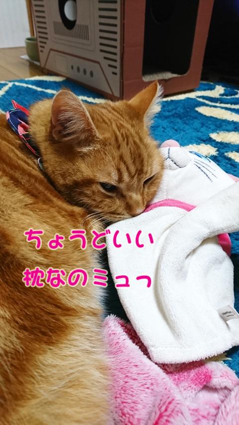 ミュウとパペカト6.jpg