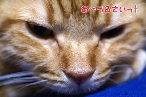 ミュウとパペカト(うるさい).jpg