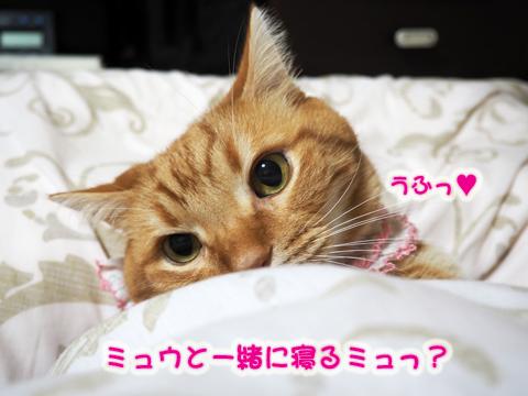 乙メン8.jpg