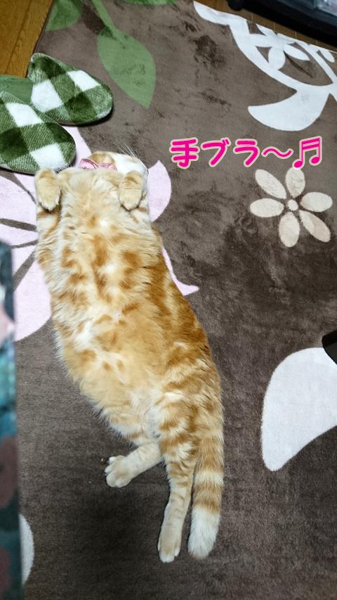喜びの舞.jpg