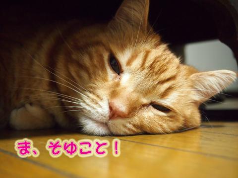 秋のうつぼ3.jpg