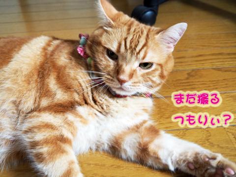 秋の気配3.jpg