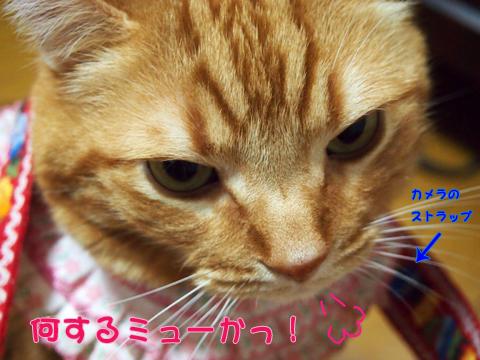 雨の日の遊び3.jpg