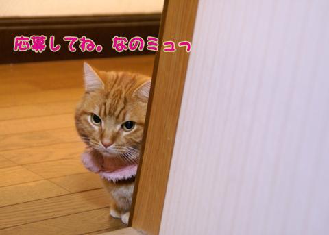 2014猫友日めくりカレンダー4.jpg