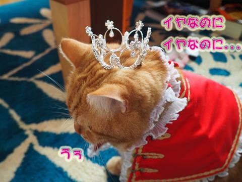 2016ミュウ誕生日13.jpg