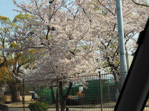 2019桜-1.jpg