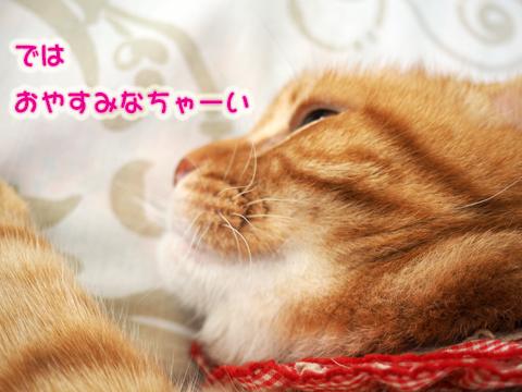 ねむねむぼんじゅ〜11.jpg