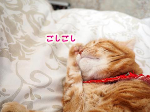 ねむねむぼんじゅ〜8.jpg