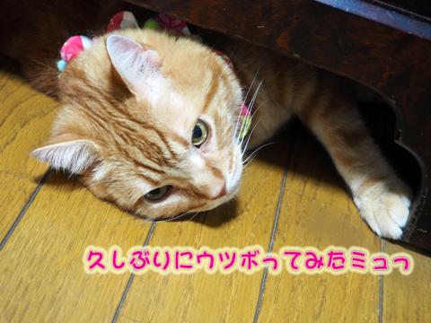 ウツボ活動201708-1.jpg