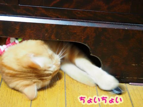 ウツボ活動201708-2.jpg