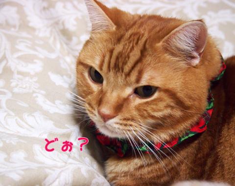 クリスマス仕様ブラウス.jpg