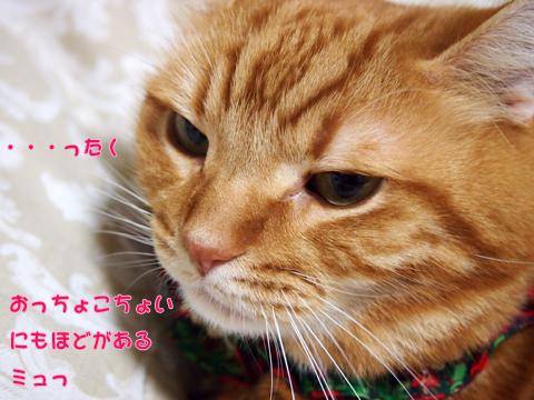 クリスマス仕様ブラウス2.jpg