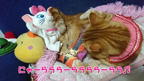 ニャ加瀬ミュウ太郎1.jpg