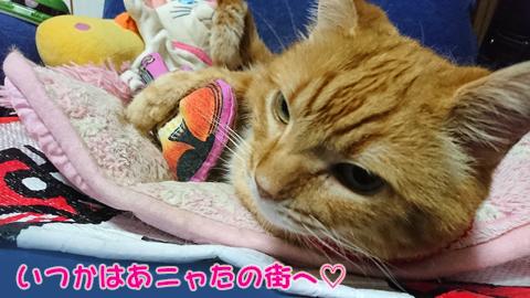 ニャ加瀬ミュウ太郎4.jpg