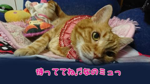 ニャ加瀬ミュウ太郎5.jpg
