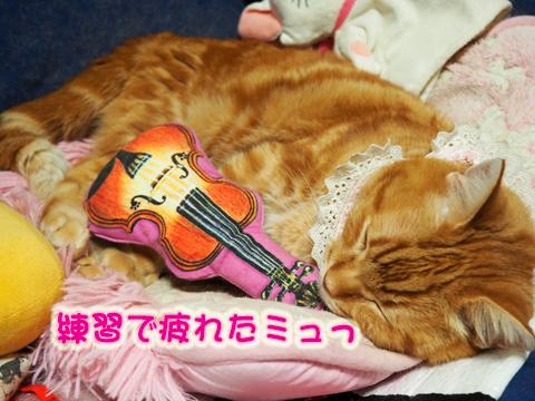 バイオリンまたたび9.jpg