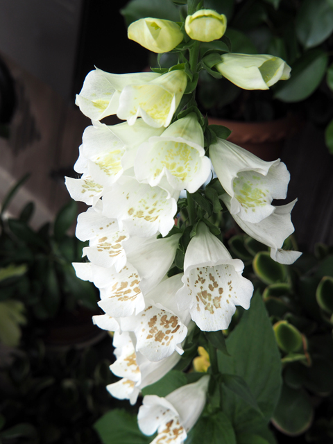 庭の花(??)2019.jpg